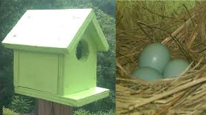 bird house a kid can make for free youtube