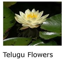 All Types Of Flowers List - telugu flowers android apps on google play