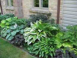 Flowers For Backyard by Best 25 Shade Garden Ideas On Pinterest Shade Plants Shade
