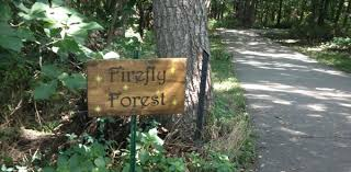 Kansas forest images The firefly forest for friends and fans of hollow tree lane jpg