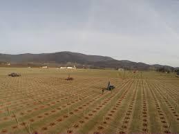 installing a vineyard hilliard management