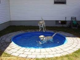 Home Design Story Dog Bone by Build A Diy Dog Pool To Keep Your Pup Cool Healthy Paws