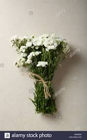 Baby Breath Flowers Baby Breath Flowers On Concrete Background Top View Stock Photo