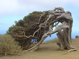 cool trees coolest looking type of tree that you have seen archive turker