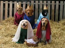 imagenes de los reyes magos y sus animales ya vienen los reyes magos perro perros mascotas artículos de