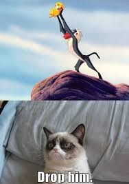 19 Awesome Grumpy Cat Christmas - 19 best grumpy cat stuff images on pinterest funny stuff funny