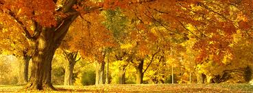 fall autumn fall autumn yellow and orange leaves free facebook covers