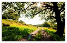 beautiful landscape tree shadow 4k hd
