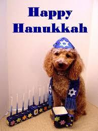 cat menorah 15 best cats dogs images on happy hanukkah hanukkah