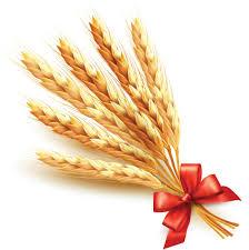 orange halloween ribbon background golden wheat with red ribbon vector background 02 vector