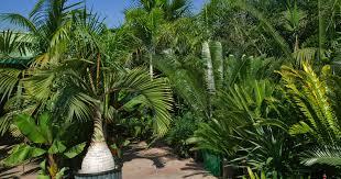 australian native plants sydney heart garden online plant nursery mail order plant nursery