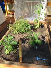garden greenhouse ideas diy greenhouses for raised garden beds the interior frugalista