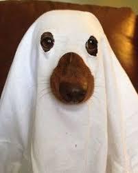 Dogs Halloween Costume 100 Creative Diy Costume Ideas Dogs Diy Costumes Costumes