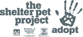 the shelter the shelter pet project adopt a pet the shelter pet project