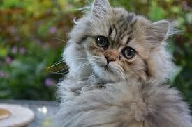 causes of vomiting u0026 diarrhea in cats canna pet