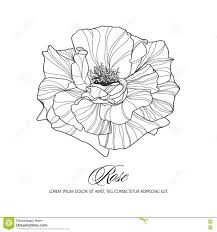 greeting card with rose ink sketch stock vector image 72972109