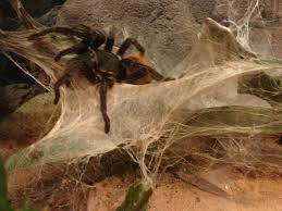 araign馥 dans la chambre araign馥 dans la chambre 59 images la plante araignée