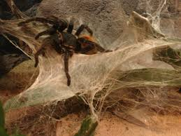 cuisiner araign馥 de mer araign馥 dans la chambre 47 images araign馥cuisine 74 images