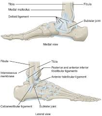 Foot Ligament Anatomy Ankle Injuries Sprained Ankle And Ankle Injuries Treatment Patient