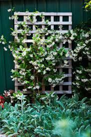 trendy climbing plants for shade about abdcebddbeda shade garden