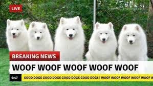 Funny Animal Memes - funny animal memes the mocking memes
