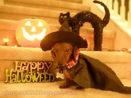 Halloween Costumes Miniature Dachshunds 145 Halloween Dachshund Dogs Images Dachshunds