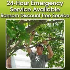 tree maintenance fort wayne in ransom discount tree service