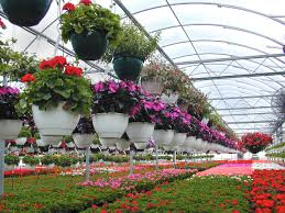 Pictures Of Gardens And Flowers by Floriculture Wikipedia