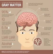 25 facts about your gray matter you should know brainscape blog