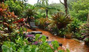 Tropical Patio Design Layered Sub Tropical Palm Garden Seed Landscapes Garden Photos Of