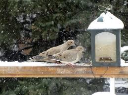 backyard bird conservation birds calgary