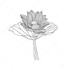 engraving hand drawn illustration of lotus flower u2014 stock vector