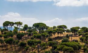 sparse trees on hill against cloudy sky stock photo image