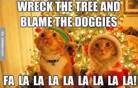 Funny Christmas Cat Memes - christmas cat meme
