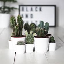 15 things every stylish has at home cacti clay and plants