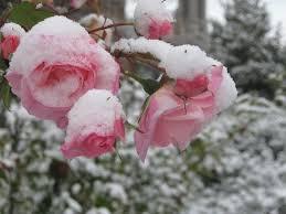 end of summer start of winter by otohime san on deviantart