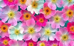 organizational culture flower market directive communication