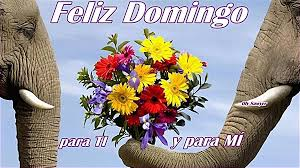 imagenes de amor para el domingo imagenes de amor de buenos dias para descargar imagenes de flores