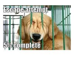 resume templates janitorial supervisor meme dog funny memes clean 41 best dog stuff images on pinterest funny dog memes funny