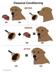 start here care for reactive dogs
