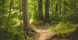 in the woods a day for a walk in the woods by richard heinberg common