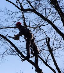 home of nicholasville and versailles best tree service