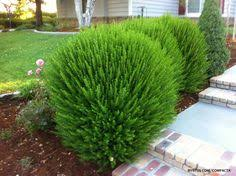 Landscaping Ideas For Front Yard 130 Simple Fresh And Beautiful Front Yard Landscaping Ideas