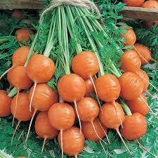 parisian carrot seeds 1 lb u2013 non gmo heirloom vegetable garden