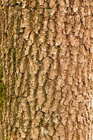 wood texture free high resolution tree branch photo patternpictures
