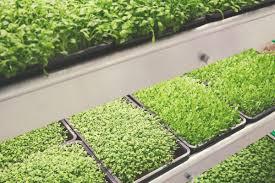 Ikea Flatpack Vertical Garden Ikea Has Debuted An Indoor Farm That Grows Greens Three Times