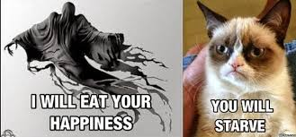 Grumpy Cat No Meme - grumpy cat and other memes google