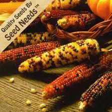 cheap seed corn companies find seed corn companies deals on line