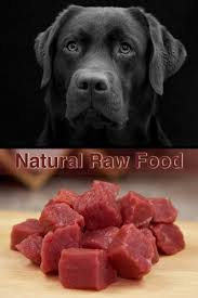 raw feeding a natural diet for labradors the labrador site