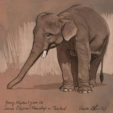 young asian elephant sketch digital art by aaron blaise